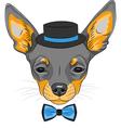 dog Chihuahua breed vector image vector image