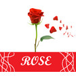 realistic red rose and petals will falling vector image