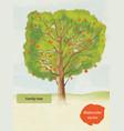 watercolor family tree vector image