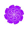 violet rose flower icon organic plant hand vector image vector image