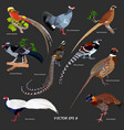 collection of different kinds of pheasants vector image vector image