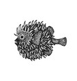 dotwork fish hedgehog vector image vector image