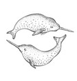 narwhal unicorn sketch cute whale cartoon vector image vector image