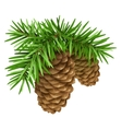 Pine branches with cones vector image vector image