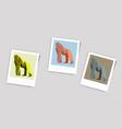 polaroid photo of gorilla vector image
