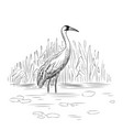 whooping crane vector image vector image