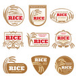paddy rice labels organic natural product vector image vector image
