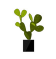 prickly pear cactus in pot traditional mexican vector image vector image