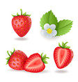 realistic sweet strawberry set with leaves and vector image vector image