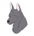 wolf portrait vector image vector image