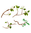branch various sprigs twig apple tree and bush vector image vector image