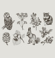 collection of highly detailed hand drawn owl vector image vector image