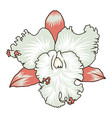 floral element orchid flower with countur isoleted vector image vector image