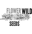 why begin with wild flower seeds text word cloud vector image vector image
