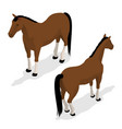 western horse with saddle and bridle isometric vector image