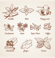 cinnamon chocolate lemon and other kitchen herbs vector image vector image
