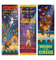 circus acrobat juggler trained bear lion animal vector image vector image