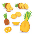 set of pineapple slices isolated on white vector image vector image