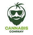 cannabis and man logo vector image vector image