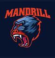 angry mandrill monkey head sport logo vector image