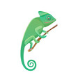 lizard sitting on branch vector image