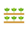 row of growing sprout agriculture and farming vector image vector image