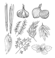 Culinary Herbs and Spices Vintage vector image