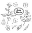 jasmine set vector image vector image