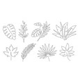 tropical leaves palm tree and maple linear leaf vector image