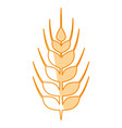 wheat food symbol vector image vector image