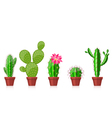 set of cactuses vector image
