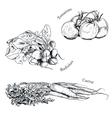 Hand drawn vegetables ink sketches set vector image