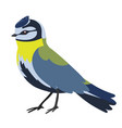 bird tit isolated on a white background vector image vector image