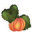 detailed orange pumpkin vector image vector image
