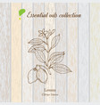 pure essential oil collection lemon vector image vector image
