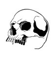 skull collection hand drawn skulls hard core vector image vector image