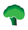 broccoli icon flat style vector image