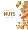 Bright background with different nuts vector image vector image