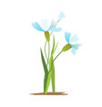 blue and white spring flowers bouquet vector image vector image
