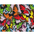 Colorful tropical seamless pattern with butterflie vector image