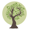 flat olive tree vector image