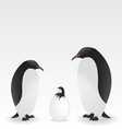 penguins and baby penguin vector image