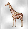 wild giraffe on transparent background vector image vector image