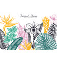 exotic flora frame tropical plants flowers vector image
