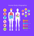 human body infographic on vector image