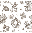 berries sketch seamless pattern background vector image