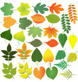 collection different species foliage vector image vector image