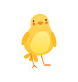 cute baby chicken funny cartoon bird character vector image