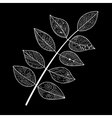 Leaves doodle vector image vector image