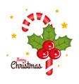 merry christmas candy cane sweet holly berry star vector image vector image